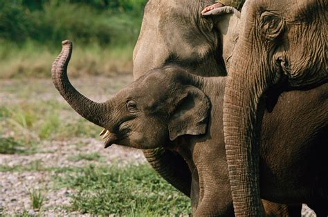 Global Wildlife Summit: Fight Against Illegal Ivory