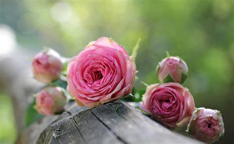 Flower Meanings: Symbolism of Flowers, Herbs, and Trees