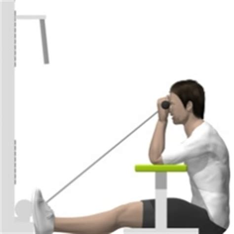Cable Curl, Seated, Flat Bench, Cable   Exercise