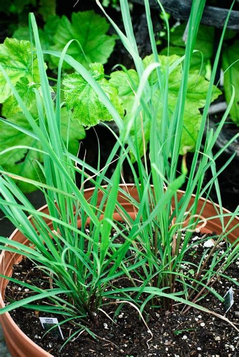 Foods You Can Re-Grow Yourself From Kitchen Scraps | The