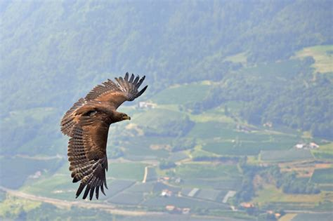 These Three Eagles Left Israel to Find Love in Europe